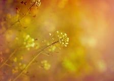 Flores brancas pequenas bonitas Foto de Stock Royalty Free