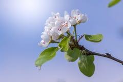 Flores brancas pequenas na frente do céu azul Fotos de Stock Royalty Free