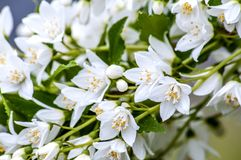 Flores brancas pequenas que conectam para baixo Fotografia de Stock Royalty Free