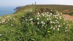 Flores brancas que movem-se no vento em Brittany vídeos de arquivo