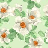 Flores brancas Teste padrão floral sem emenda 1 Fotos de Stock