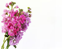 Flores brilhantemente coloridas Imagens de Stock
