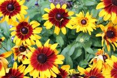Flores brilhantes imagem de stock