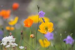 Flores brilhantes Fotos de Stock Royalty Free