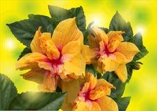 Flores brilhantes amarelas em um fundo verde Imagens de Stock
