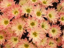 Flores brilhantes bonitas Imagem de Stock Royalty Free
