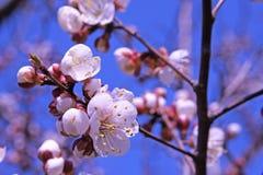 Flores brilhantes da mola Fotografia de Stock Royalty Free