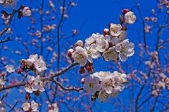Flores brilhantes da mola Imagem de Stock