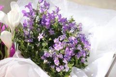 Flores brilhantes delicadas Imagem de Stock