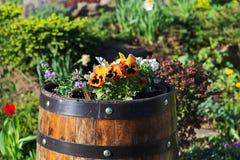 Flores brilhantes diferentes do ver?o em uns tambores de madeira fotografia de stock royalty free