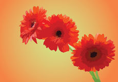 Flores brilhantes do verão. Ilustração Royalty Free