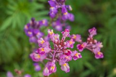 Flores brilhantes do verão em uma cama de flor imagem de stock royalty free