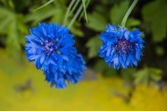 Flores brilhantes do verão em uma cama de flor fotos de stock royalty free