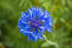 Flores brilhantes do verão em uma cama de flor foto de stock royalty free