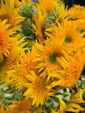 flores brilhantes e ensolaradas bonitas Imagens de Stock Royalty Free