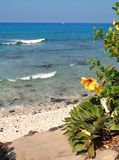 Flores brilhantes e um dia preguiçoso no paraíso Fotografia de Stock Royalty Free