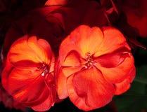 Flores brillantes Imágenes de archivo libres de regalías
