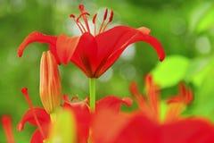 Flores brillantes de la primavera imágenes de archivo libres de regalías
