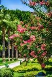 Flores brillantes de Turquía en lado Fotos de archivo