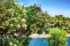 Flores brillantes de Turquía en lado Imagen de archivo libre de regalías