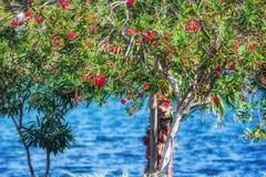 Flores brillantes de Turquía en lado Foto de archivo libre de regalías