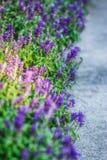Flores brillantes de Turquía en lado Imagen de archivo