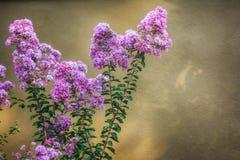 Flores brillantes de Turquía en lado Fotos de archivo libres de regalías
