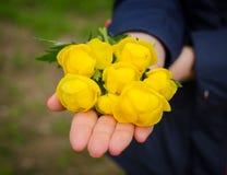 Flores brillantes del bosque Fotos de archivo libres de regalías