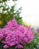 Flores brillantes del jardín en el macizo de flores Imagen de archivo