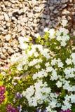 Flores brillantes del jardín en el macizo de flores Foto de archivo