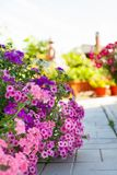 Flores brillantes del jardín en el macizo de flores Imágenes de archivo libres de regalías