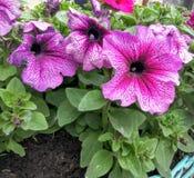 Flores brillantes del resorte Foto de archivo