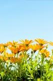 Flores brillantes del verano Fotografía de archivo libre de regalías