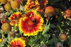 Flores brillantes del verano Fotografía de archivo