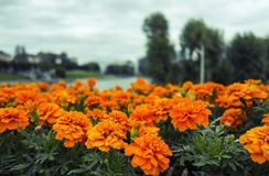 Flores brillantes en el parque Foto de archivo