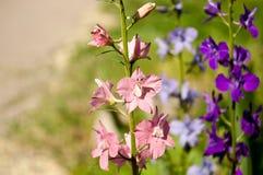Flores brillantes hermosas en un fondo borroso en un día de verano Fotos de archivo libres de regalías