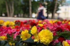 Flores brillantes que crecen en la calle Imagen de archivo libre de regalías