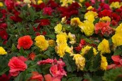 Flores brillantes que crecen en la calle Fotos de archivo libres de regalías