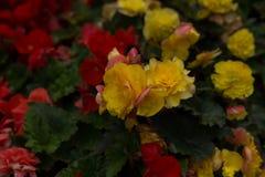 Flores brillantes que crecen en la calle Imagen de archivo