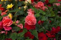 Flores brillantes que crecen en la calle Imágenes de archivo libres de regalías