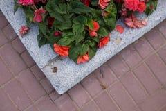 Flores brillantes que crecen en la calle Foto de archivo libre de regalías
