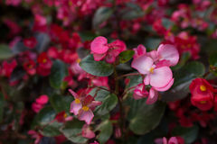 Flores brillantes que crecen en la calle Fotos de archivo