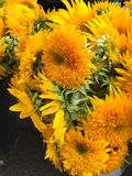 flores brillantes y soleadas preciosas foto de archivo libre de regalías