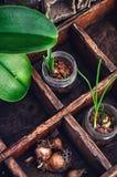 Flores brotadas en los tarros de cristal Fotografía de archivo libre de regalías
