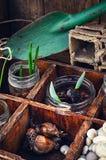 Flores brotadas en los tarros de cristal Foto de archivo