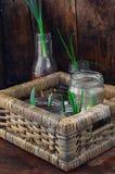 Flores brotadas en los tarros de cristal Imagen de archivo libre de regalías