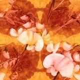 Flores, brotes, ramas del guisante de olor Composición decorativa en un fondo de la acuarela watercolor Adornos florales Patte in Imagen de archivo