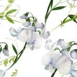 Flores, brotes, ramas del guisante de olor Composición decorativa watercolor Adornos florales Patte inconsútil ilustración del vector