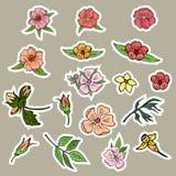 Flores, brotes y hojas de las etiquetas engomadas de elementos individuales Vector ilustración del vector
