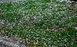 Flores caídas da árvore de pêssego na grama ilustração do vetor